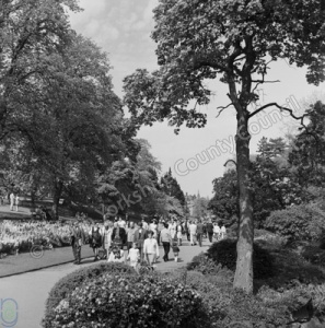 Harrogate, Valley Gardens, Scroll Bed, 1970